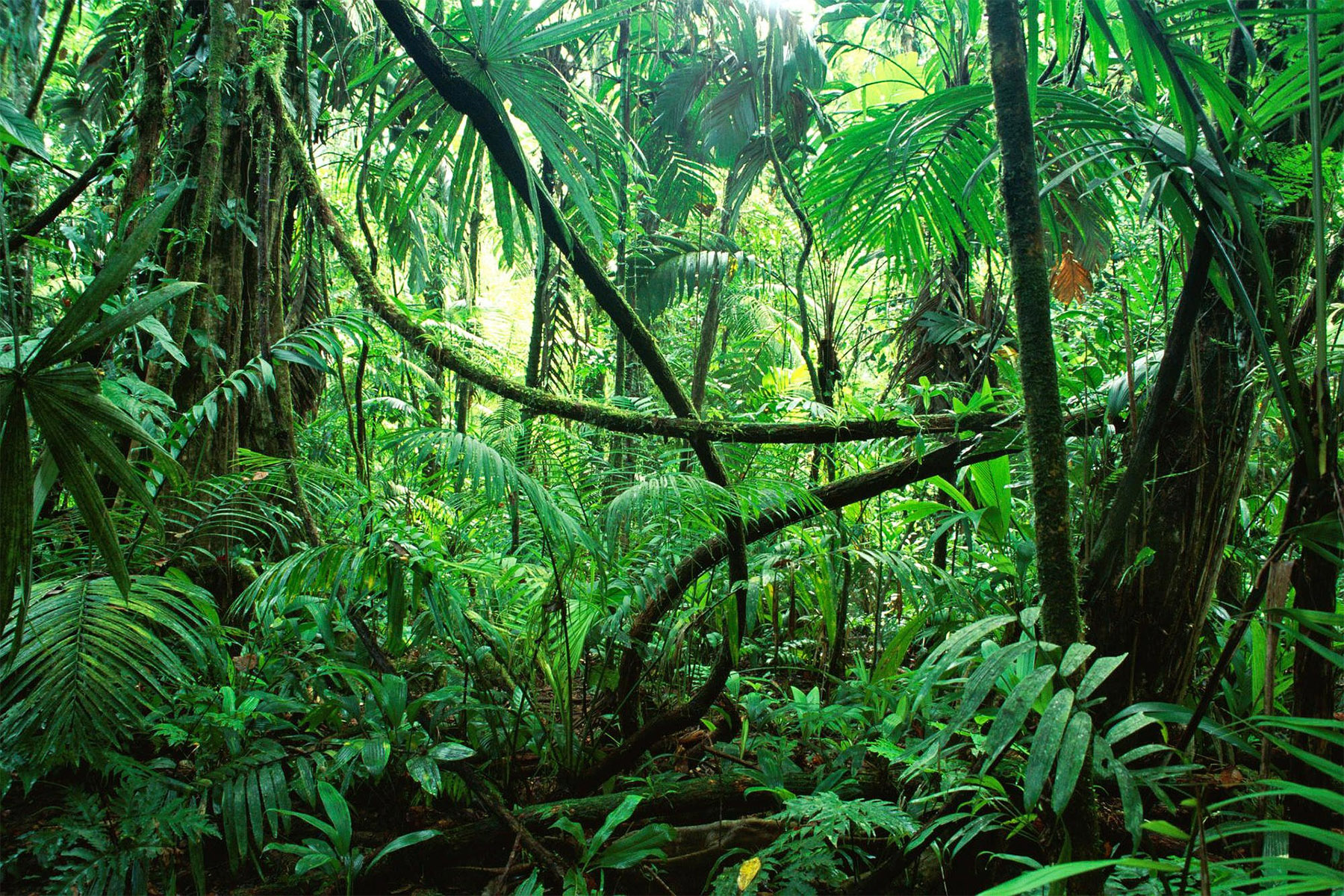 Jungle Chiapas Mexico